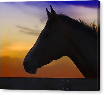 Silhouette Of A Horse At Sunset Canvas Print by Wolf Shadow  Photography