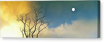 Silhouette Of A Solitary Bare Tree Canvas Print by Panoramic Images