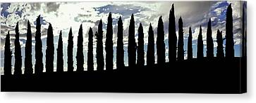 Silhouette Of Cypress Trees Canvas Print