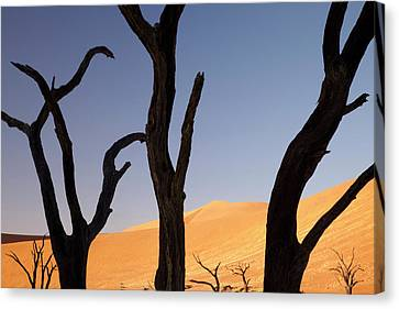 Silhouette Of Dead Tree And Sand Dunes Canvas Print by Jaynes Gallery