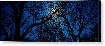 Silhouette Of Oak Trees, Texas, Usa Canvas Print by Panoramic Images