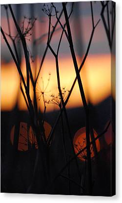 Canvas Print featuring the photograph Silhouette Of Old Queens by Jani Freimann