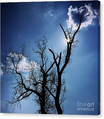 Silhouette Of Old Tree Branches Against Blue Sky Backlit Canvas Print by Bernard Jaubert