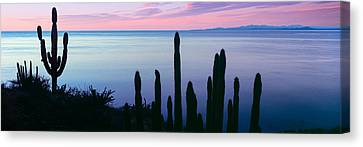 Baja California Canvas Print - Silhouette Of Pitaya And Cardon Cactus by Panoramic Images