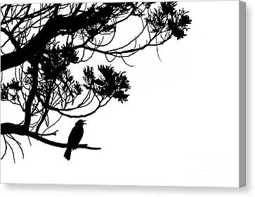 Silhouette Of Singing Common Blackbird In A Tree Canvas Print