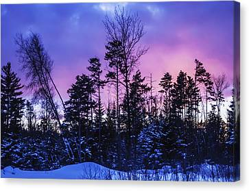 Silhouette Of Trees During A Colourful Canvas Print by Jacques Laurent