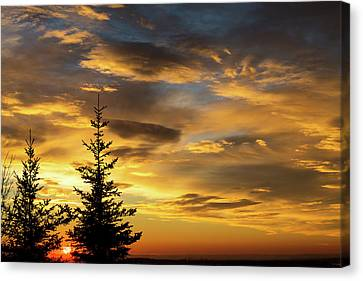 Silhouette Of Two Evergreen Trees Canvas Print by Michael Interisano