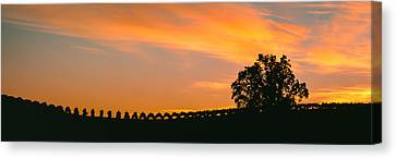 Silhouette Of Vineyard At Sunset, Paso Canvas Print by Panoramic Images