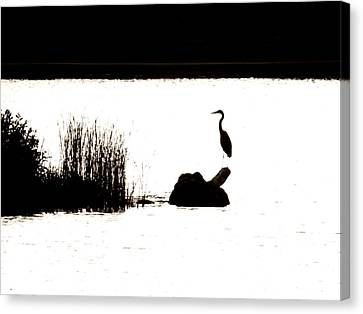 Canvas Print featuring the photograph Silhouette by Zinvolle Art