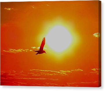 Silhouetted Seagull  Canvas Print by Stephen Melcher