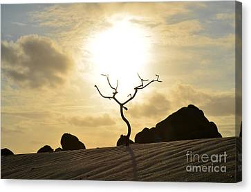 Silhouetted Tree At Dawn In Aruba Canvas Print by DejaVu Designs