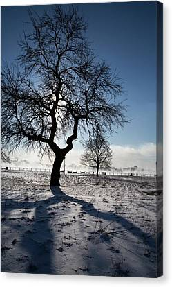 Silhouetted Tree In Winter Canvas Print by Jim West