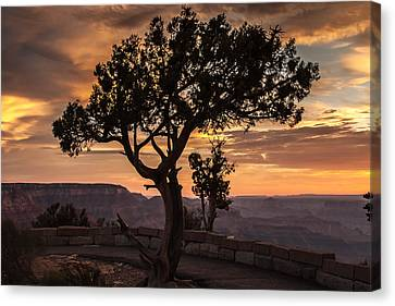 Silhouetted Tree Canvas Print