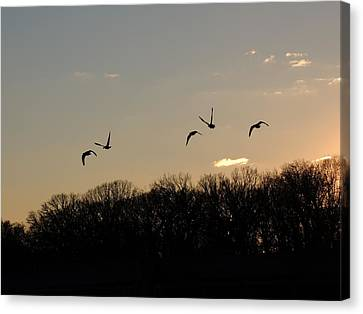 Silhouettes At Dusk Canvas Print by Teresa Schomig