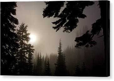 Silhouettes Of Trees On Mt Rainier Canvas Print by Greg Reed