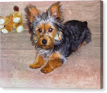 Silky Terrier - Watercolor Canvas Print by Scott Hervieux