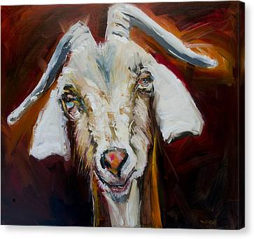 Silly Goat Canvas Print