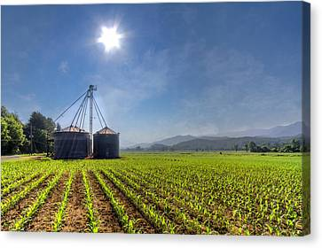 Silos Canvas Print by Debra and Dave Vanderlaan