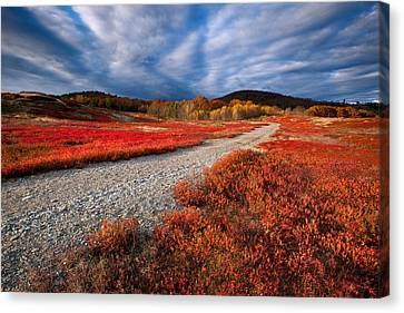 Silsby Plains Canvas Print by Patrick Downey