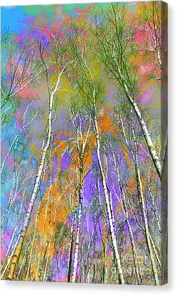 Silver Birch Canvas Print by Michelle Orai