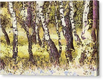 Silver Birch Canvas Print by Odon Czintos