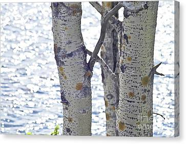 Silver Birch Trees At A Sunny Lake Canvas Print by Heiko Koehrer-Wagner