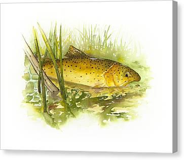Silver Creek Apache Trout Canvas Print
