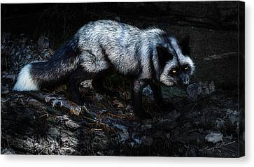 Tracy Munson Canvas Print - Silver Fox by Tracy Munson