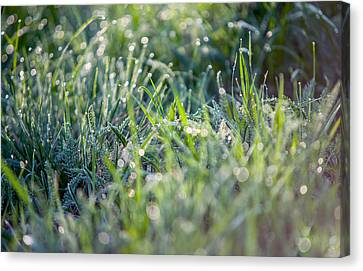 Silver Grass 2. Small Natural Wonders Canvas Print by Jenny Rainbow