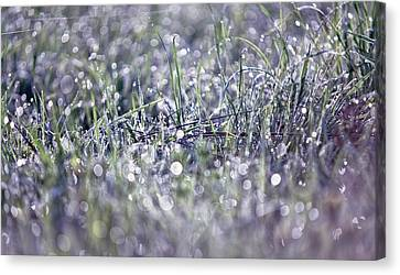 Silver Grass. Small Natural Wonders Canvas Print by Jenny Rainbow