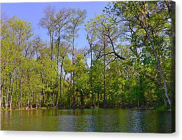 Fl Canvas Print - Silver River Florida by Christine Till