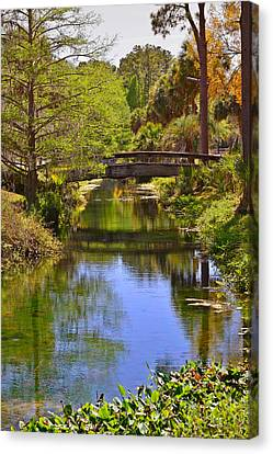 Florida Images Canvas Print - Silver Springs Florida by Christine Till