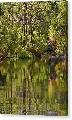 Silver Springs Nature Park Florida Canvas Print