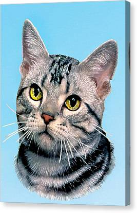Silver Tabby Kitten Original Painting For Sale Canvas Print by Bob and Nadine Johnston