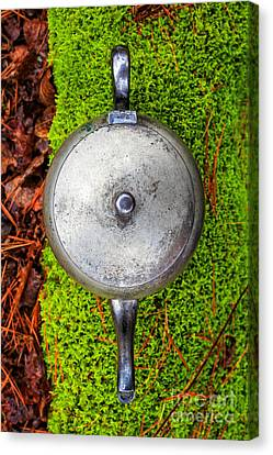 Silver Teapot In The Forest Canvas Print