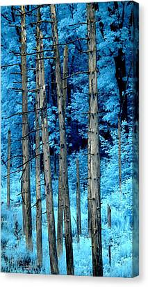Silver Trees Canvas Print by Luke Moore
