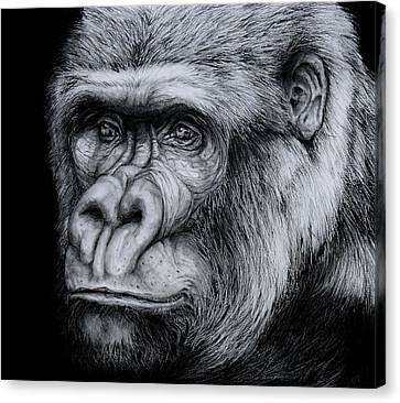 Silverback - A Drawing Canvas Print by Jean Cormier