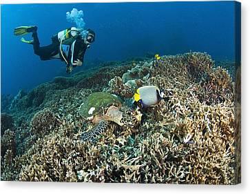Similan Islands Thailand Scuba Diver Canvas Print by Stuart Westmorland