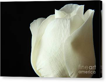 Simple Beauty Canvas Print by Eden Baed