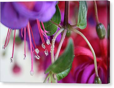 Canvas Print - Simple Beauty by Maria Schaefers