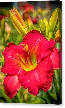 Simple Lily Canvas Print