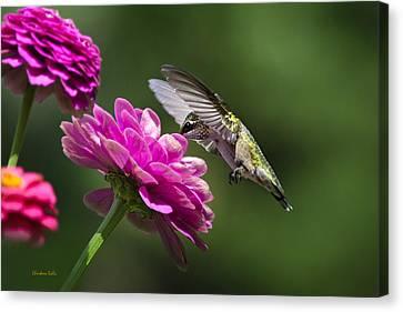 Canvas Print featuring the photograph Simple Pleasure Hummingbird Delight by Christina Rollo