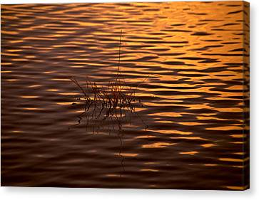 Simple Sunset Canvas Print