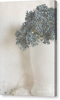 Simple Vintage Still Life Canvas Print