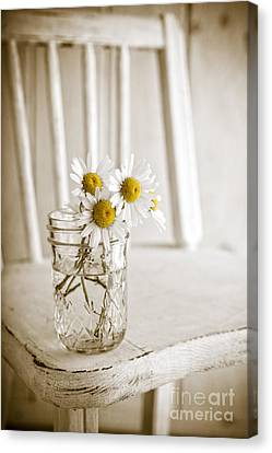Simple White Daisy Flowers Canvas Print by Edward Fielding