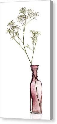 Simplicity Canvas Print by Dave Bowman