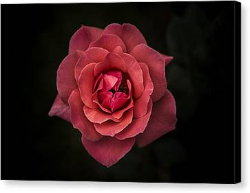 Simplicity Is Beauty Canvas Print by Rui Boino