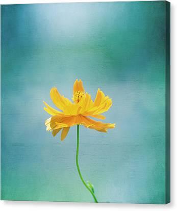 Simplicity Canvas Print by Kim Hojnacki