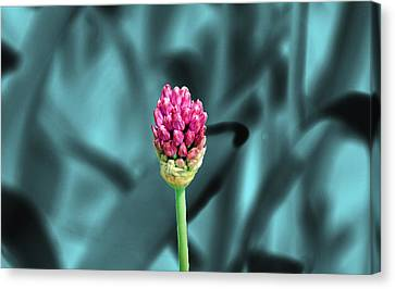 Simply Beautiful Canvas Print by Aimee L Maher Photography and Art Visit ALMGallerydotcom