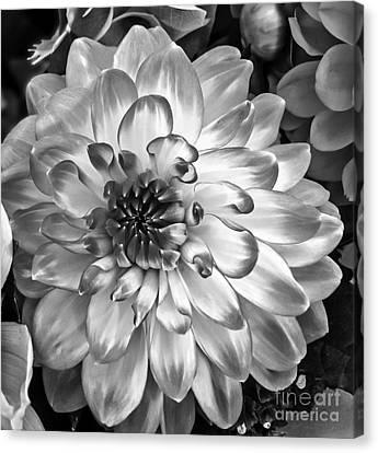 Simply Beautiful Canvas Print by Arlene Carmel